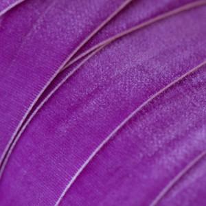 Бархатная лента, фиолетовый, ширина 19 мм...